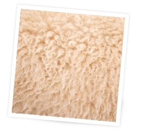 Wake up to the benefits of wool